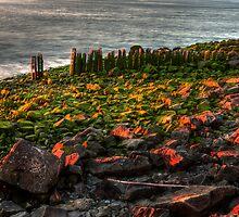 Green Velvet Rocks by EvaMcDermott