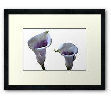 Beautiful Calla Lilies Framed Print