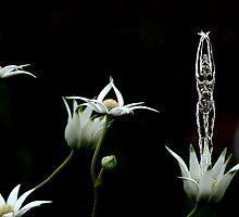 Flower Dancers by sparrowdk