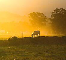 Dusty Horse by Bart Reardon
