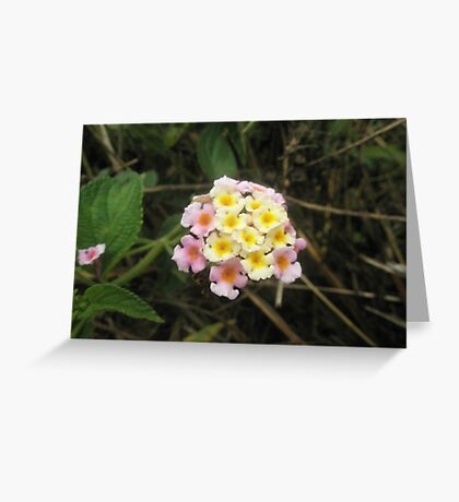 Coloured Wildflower Greeting Card