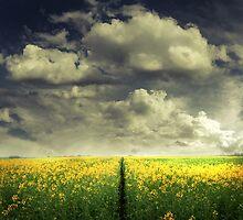 Right After Rain by Vladimir Konovalov