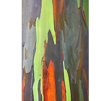 Colorful peeling bark - 2011 Photographic Print