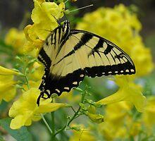 Butterfly in the Esperanza by Cathy Jones