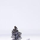 Lonely Landscape by Gary Lengyel