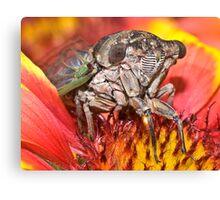 Cicada SuperModel ! Canvas Print