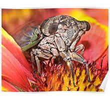 Cicada SuperModel ! Poster