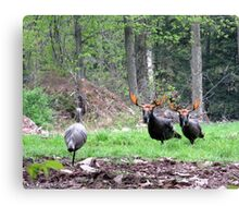 THAT'S BULL Turkeys Canvas Print