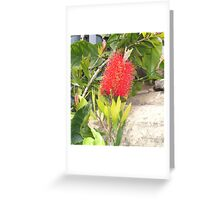 """ Bottle brush. "" Greeting Card"