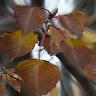 Autumn leaves bursting by indiafrank
