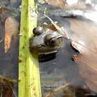 Frog peeking out of the water at the swamp! by Barberelli