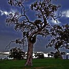 Stormy Night by Sarah Mosbey