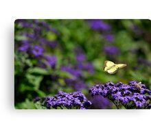 Butterflight Canvas Print