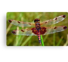 Dragonfly (Red) Canvas Print