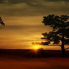 Desert Hawk by TOM YORK
