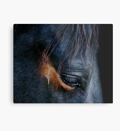 Equine Abstract Metal Print