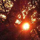 Sunrise by virginian