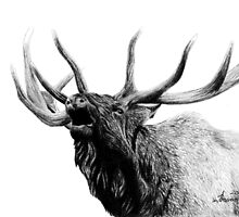 Bull elk by createdtocreate