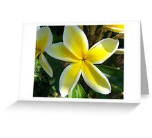 Plumeria - Sweet Fragrance II Greeting Card