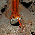 Corn Snake by Michael L Dye