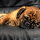 Shhh, Pug Sleeping by Barb Leopold