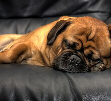 Shhh, Pug Sleeping by Barb Leopold