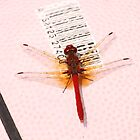 Red Dragonfly by yortman