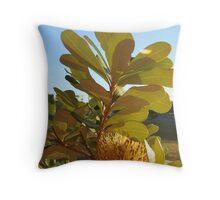 Glowing Coastal Banksia Throw Pillow