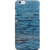 Two Mute Swans iPhone Case/Skin