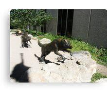 Wolf  sculptures Canvas Print