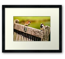 2 BIRDS ON A BENCH Framed Print