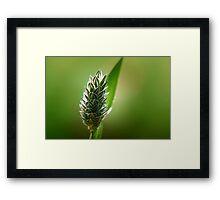 ~A Blade of  Grass~ Framed Print