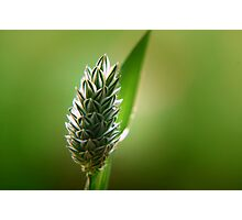 ~A Blade of  Grass~ Photographic Print
