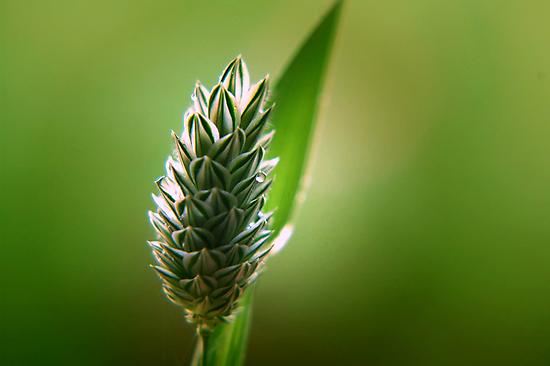 ~A Blade of  Grass~ by a~m .