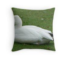 A Lesser Snow Goose Throw Pillow