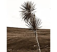 Rural NZ - Cabbage Tree Photographic Print