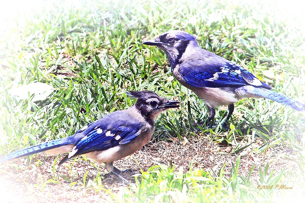Blue Jays by Pat Moore