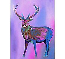 Deer Rainbow Photographic Print