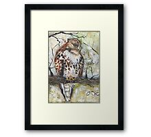 Young Red-tailed Hawk, Perched Framed Print