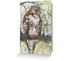 Young Red-tailed Hawk, Perched Greeting Card