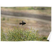 Practice Landing; Camp Pendleton/San Diego, CA U.S.A. Poster