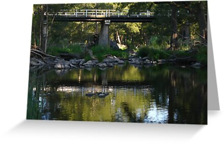 Cox's River - Hartley by Marilyn Harris