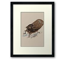 Cicada Framed Print