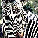 Zebra,136 viewings, 1person favorite, 6 comments by dragonsnare