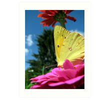 Buttered Petals Art Print