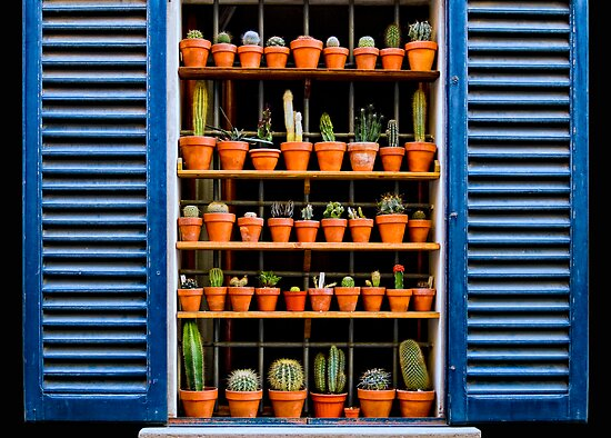 cacti window by Andrew Jones
