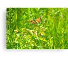 Flight of the Monarch Canvas Print