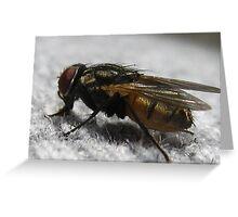 Macro Fly Greeting Card