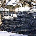 Ice skirts on trees in the Concord River in Lowell by ouellettep