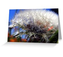 Puff Ball Greeting Card